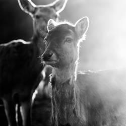 glowing deer - das beste zum schluß ;)