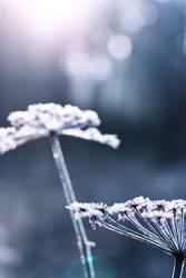 beauties of winter