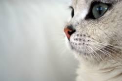 Picaso die Katze