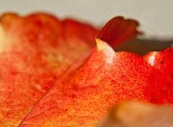 Herbstmaserung