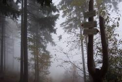 Wegweiser im Nebel