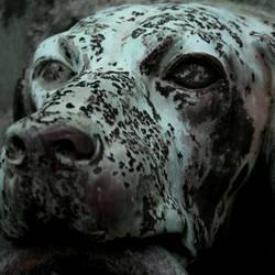 hund vorm tor