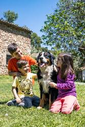 Three little kids with a Bernese dog