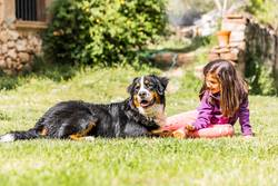 Little girl with a Bernese mountain dog