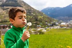 Little boy blowing a dantelion in a green field