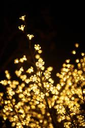 Lighted up christmas tree with light flowers