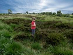 Wanderung Im Moor