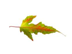 Herbstlaub VI