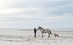 Belgisches Pferdeflüstern