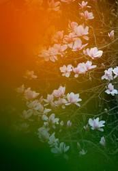 600 orangene Magnolienblättchen