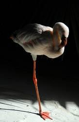 KAPUT Einbein-Flamingo