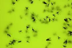 Suicide Bugs