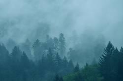 Im schwarzen Wald