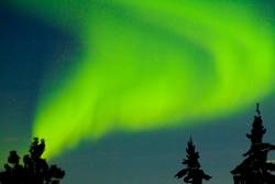 Nordlicht tanzt über den Tannenspitzen