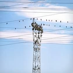 Vogelmast