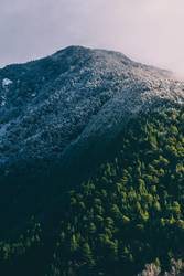 Snowy mountain with forest