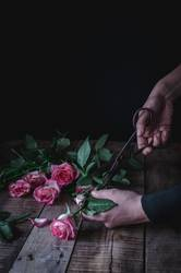 Crop person cutting roses