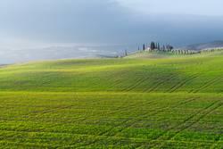 Ruhiges grünes Feld in hellem Sonnenlicht