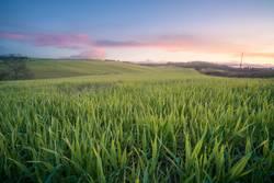 Wunderschöne leere grüne Felder