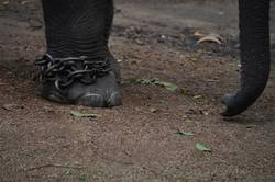 Fußkette