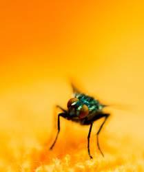 Schmeiß die Fliege
