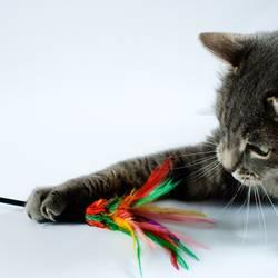 Katzentatzen kratzen.