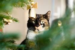 Susi die Weihnachtskatze