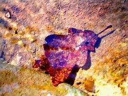Unterwasserblatt