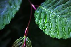 neulich im regenwald...