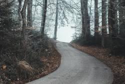 Mystischer Waldweg