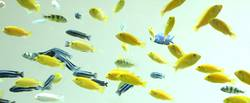 schwebende fische