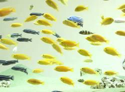 schwebende fische teil 2