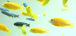 schwebende Fische Detail