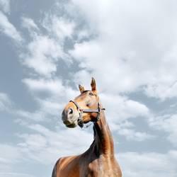 pferdperspektive