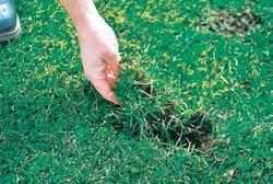 Hand legt Gras