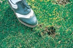 Schuh im Gras