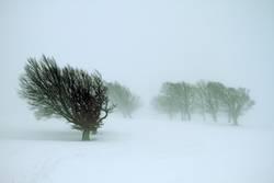 Bäume loben