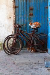 Katze sitzt auf verrostetem Fahrrad, vor blauer Tür.