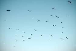 Luftig I Vogelschwarm