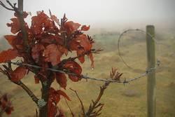 gefangen im Nebel