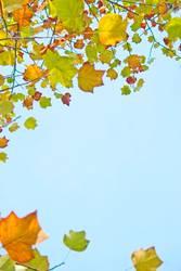 Frisch in den Herbst...(III)