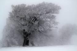 Nebulös l Usertreff Wieden l Bäume loben