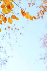 Orange Herbstblätter am Zweig, vor blauem Himmel