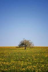 Frühlingswiese mit Obstbaum