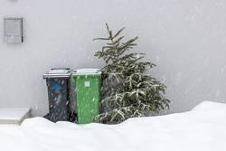 Weihnachtsbaum zum abholen.