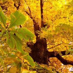 Herbstgeruch IV