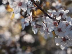 Dank Photocase das hier: Blumengrüße für Euch