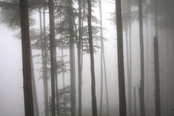 REMIXCASE | Seltsam, im Nebel zu wandern!
