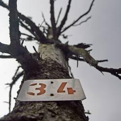 OPFER 34