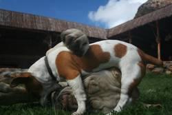 doggi dog